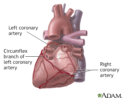 Posterior heart arteries