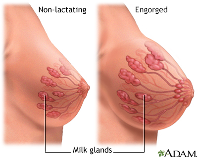 Breast Milk Glands
