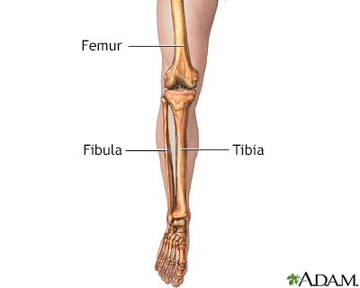 Leg skeletal anatomy