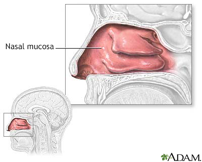 Nasal mucosa